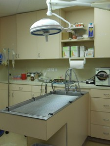 Pet Dental Care by Atlantic Animal Care Clinic