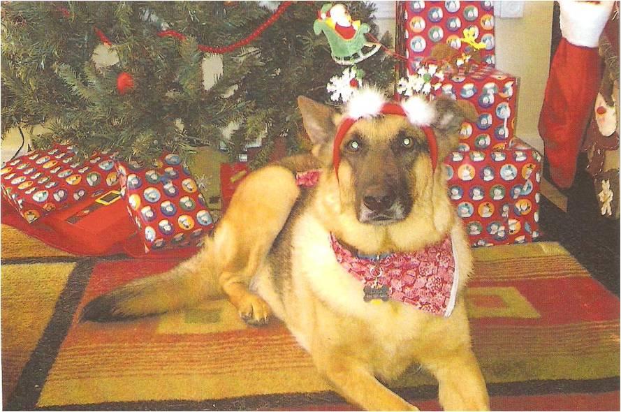 Layla - Christmas2013