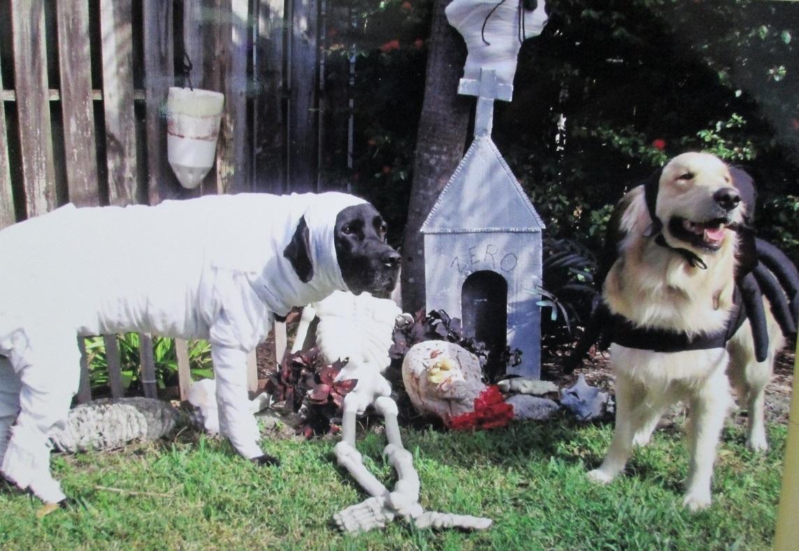 Cody Spider and Elvis Mummy Pet Halloween Costumes